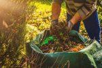 Pulizia del giardino: come gestire le piante infestanti